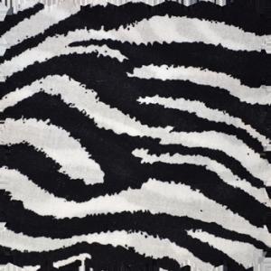 black_white_zebra